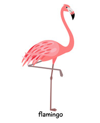 Image of nice flamingo