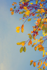 Colorful fall tree leafs against sky, vintage background