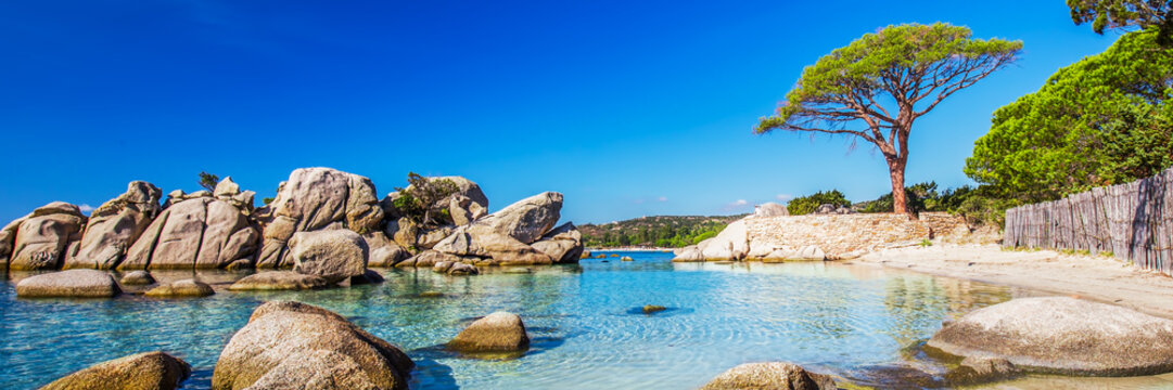 Famous pine tree and the lagoon on the Palombaggia beach, Corsica, France, Europe.