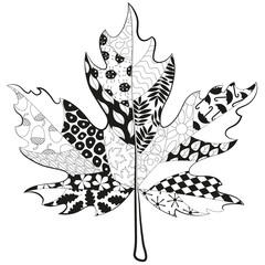 hand drawn maple doodle leaf