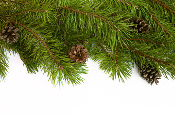 Christmas tree branches border on a white background.