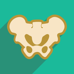 flat icon with long shadow human pelvis
