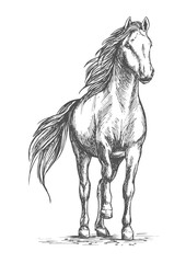 Sketched vector portrait of horse
