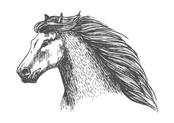 Raging gray horse free running vector portrait