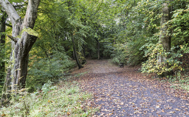 Wide path through forest at Daisy Nook Country Park in early Autumn