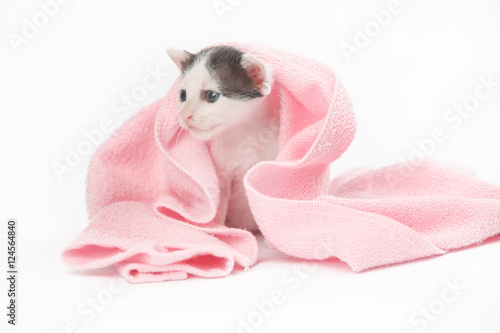 quot cute baby kitten wrapped in pink blanketquot stock photo