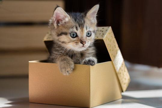 Cute kitten in christmas.