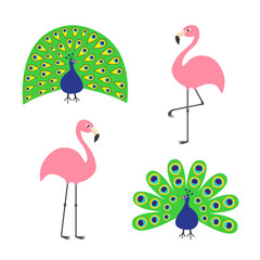 Peacock Pink flamingo set. Feather out open tail. Beautiful Exotic tropical bird. Zoo animal collection. Cute cartoon character. Decoration element. Flat design. White background. Isolated