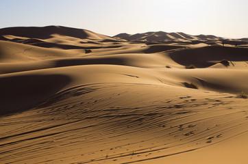 Photo sur Plexiglas Secheresse Sahara desert in Morocco