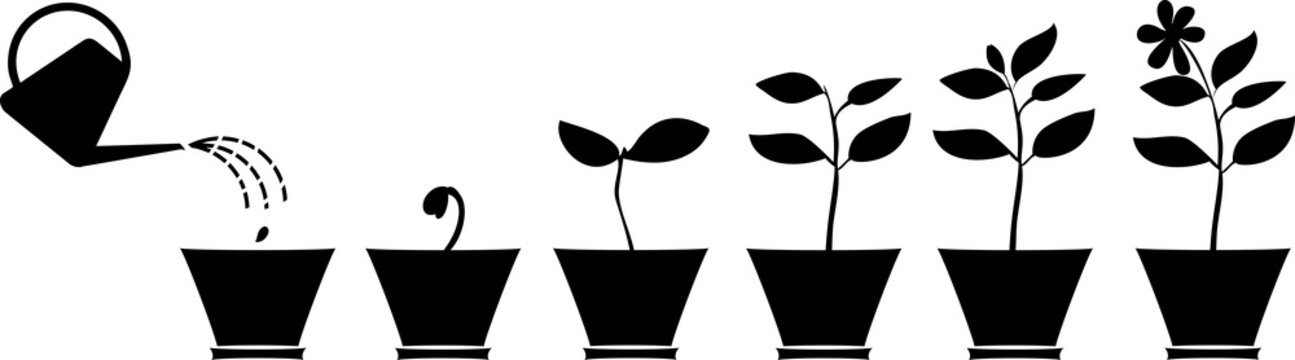 Scheme of flower growth. Silhouettes of plants in the flowerpot