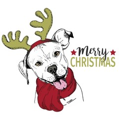 Vector portrait of Christmas dog. Pit bull dog wearing deer horn rim and scarf. Christmas poster, decoration.