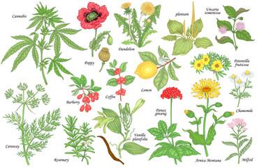 Set of medical plants