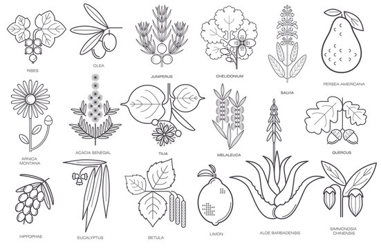 Collection of simple images of medical plants