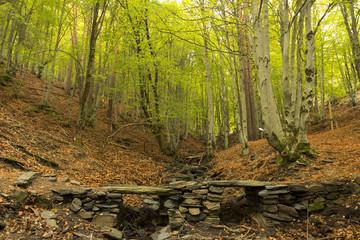 Bridge rocks background beech