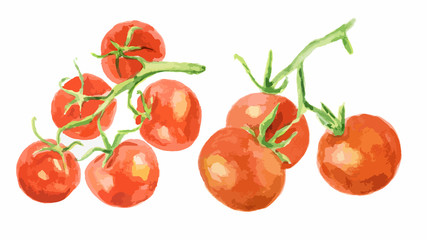Watercolor tomatoes set on white background. Healthy and ripe fresh vegetables for cooking and decoration.
