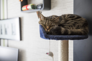 Cat sleeping on scratch post tangled together