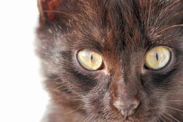 чёрная кошка с красивыми глазами  крупным планом