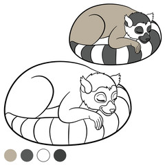 Color me: lemur. Little cute lemur sleeps.