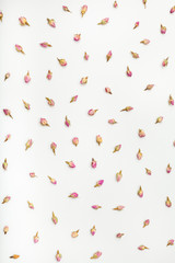 dried rose flower buds on white paper background