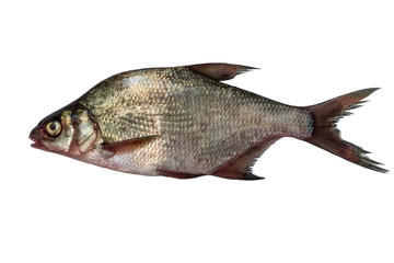fish bream isolated on white background