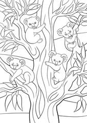 Coloring pages. Four koala babies sit on the tree.