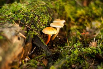 Paddestoelen in bos groeien uit boom en mos