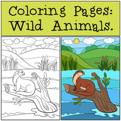 Coloring Pages: Wild Animals. Little cute otter.