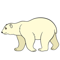 Cartoon animals. Cute polar bear smiles.