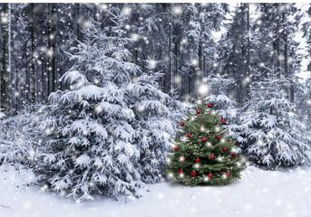 Wall Mural - Weihnachtsbaum im Wald
