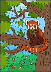 Cartoon wild animals. Little cute red panda eat leaves.