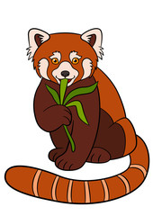 Cartoon wild animals. Little cute red panda eat leaves.