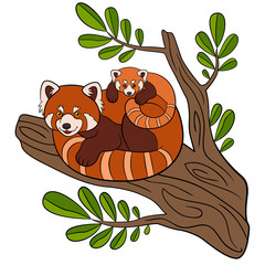 Cartoon wild animals. Mother red panda with her cute baby.