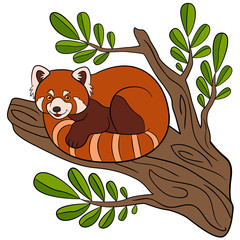 Cartoon wild animals. Little cute red panda smiles.