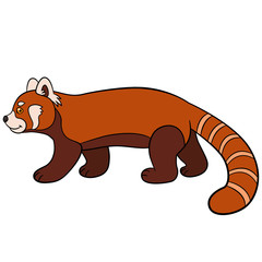Cartoon wild animals. Little cute red panda walks.