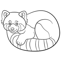 Coloring pages. Little cute red panda.