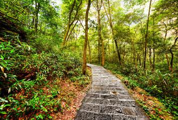 Scenic stone walkway across green woods. Beautiful landscape