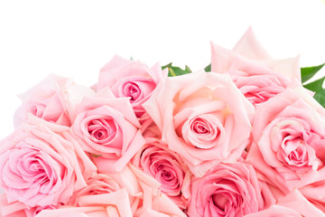 Pink blooming fresh roses border isolated on white background