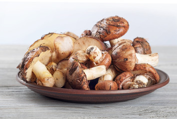Mushrooms in a clay plate.