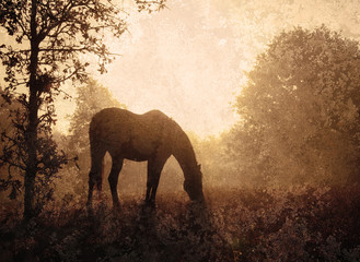 Silhouette of a grazing horse against sunrise through fog, an antique textured image in muted sepia tone