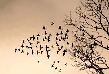 silhouette of flying bird on sunset sky