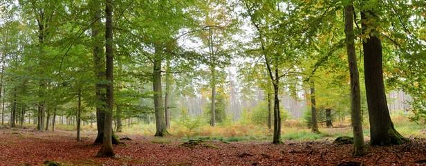 Vue panoramique dans la forêt de Saint-Amand-les-Eaux dans les hauts de France