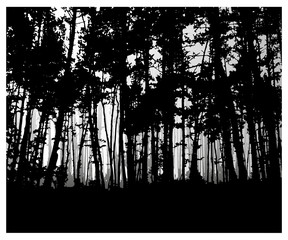 Woodland eco banner. Classic black and white tones. Can be used as poster, badge, wallpaper, backdrop, background.