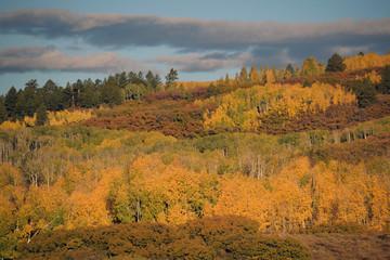 Soft Fall Colors