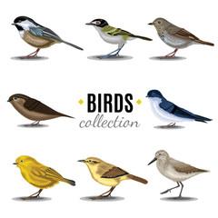 Birds collection. Sandpiper,swallow,trush, Vaux's-Swift, Vireo, Wren, Warbler, Wren