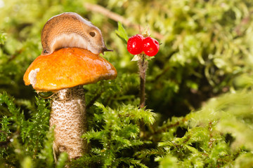 Slug on a hat of a mushroom and red berry nearby