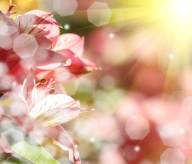 abstract nature spring Background