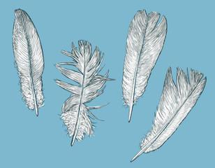 white birds feathers