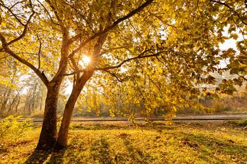 tree top in autumn