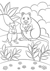 Coloring pages. Mother quokka with her cute baby.