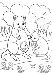 Coloring pages. Mother quokka with her cute babies.